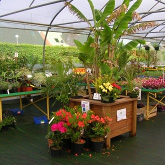 Horticulture - Maraîchage